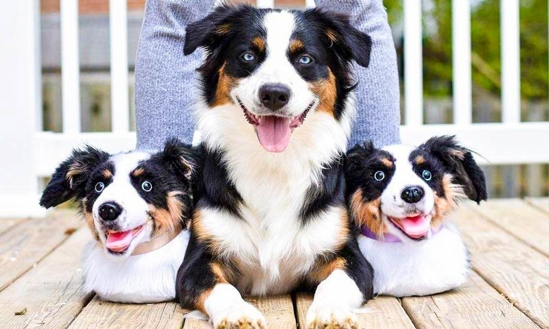 Cuddle Clones Launched Sales Hit: Home Slippers Which Are Copies Of Pets, фото № 24