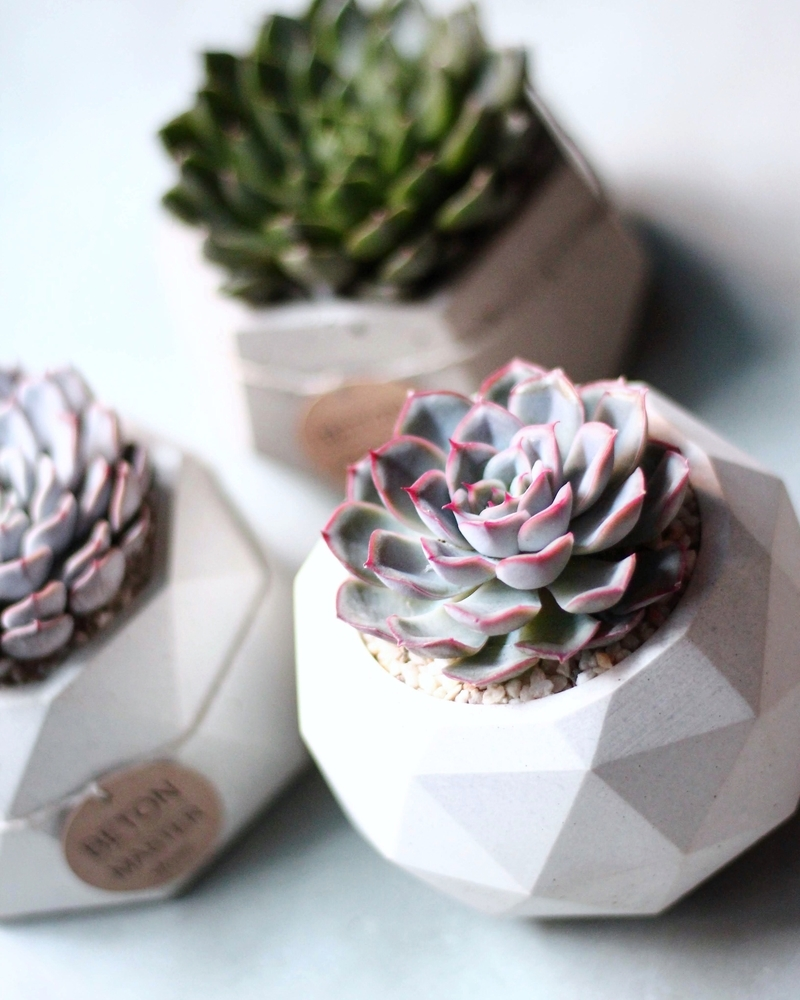 Beauty and Simplicity: 36 Interior Ideas with Succulents, фото № 28