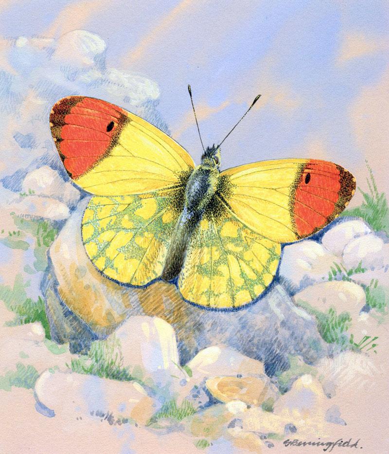 Мир Бабочек Бенингфилда, фото № 20