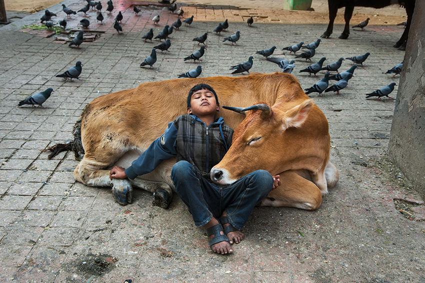 Мы с тобой одной крови 35 невероятных кадров из жизни людей и животных от легендарного фотографа Стива МакКарри, фото № 15