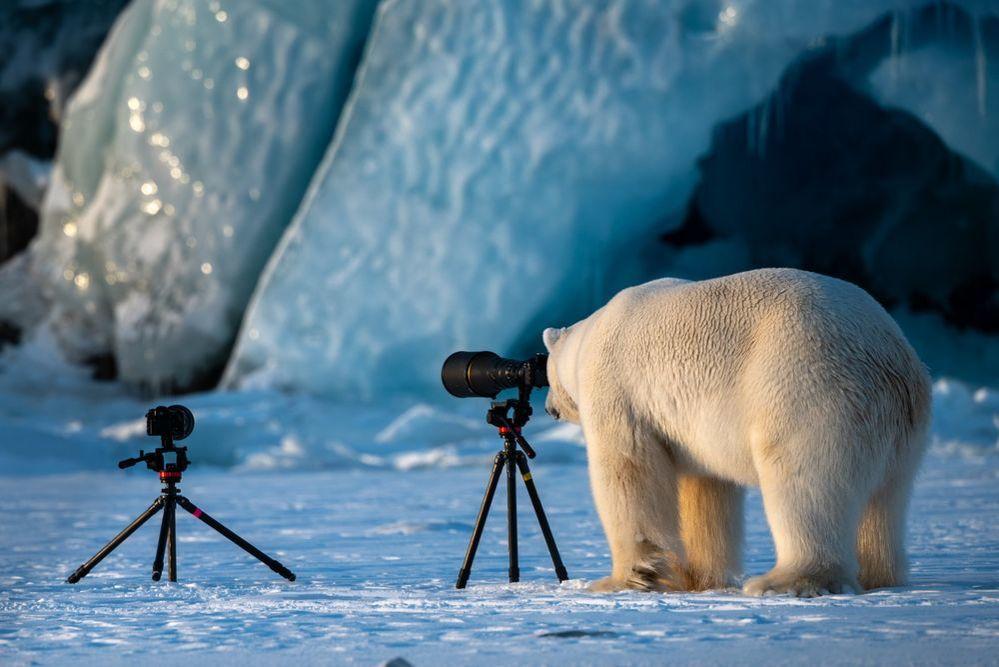 Comedy Wildlife Photography Awards, фото № 1