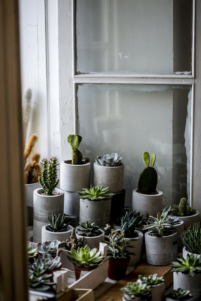 Beauty and Simplicity: 36 Interior Ideas with Succulents, фото № 29