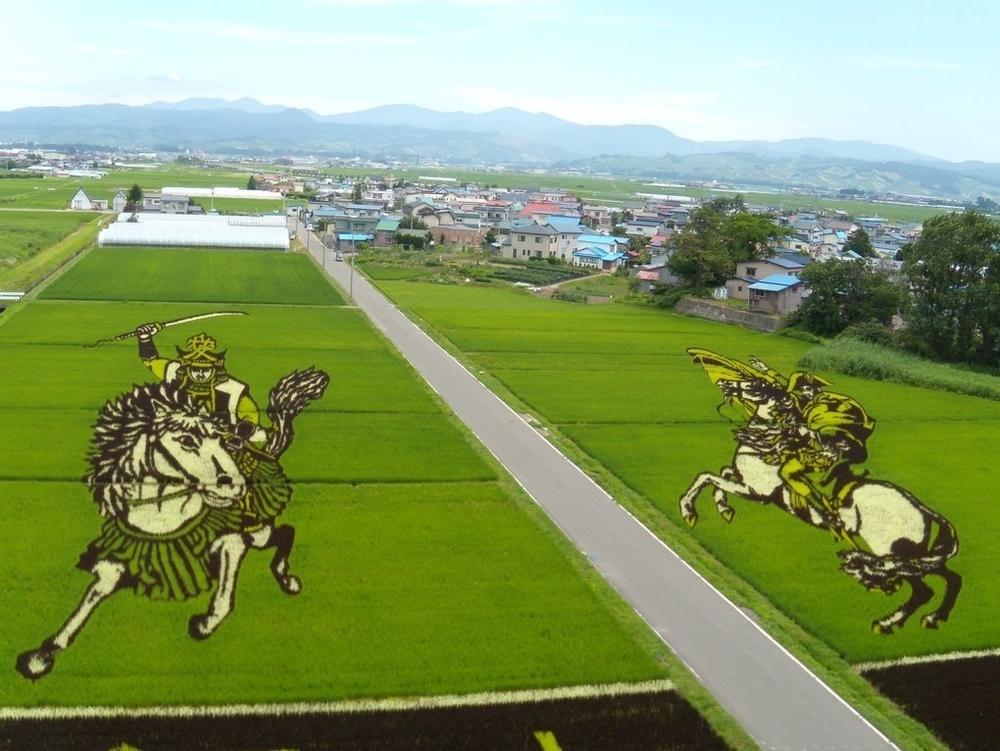 Картины на рисовых полях, меняющиеся каждый год, фото № 1