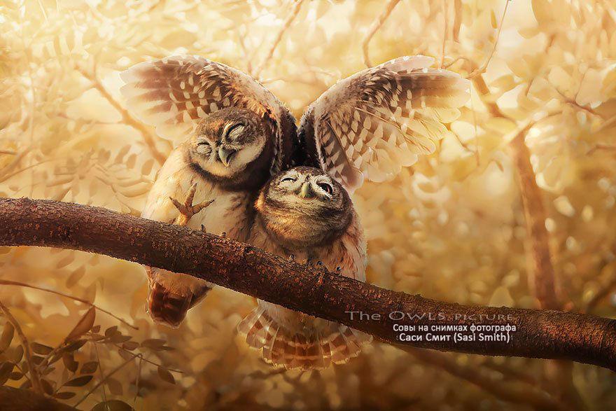 Совы на снимках тайского фотографа Саси Смита, фото № 1