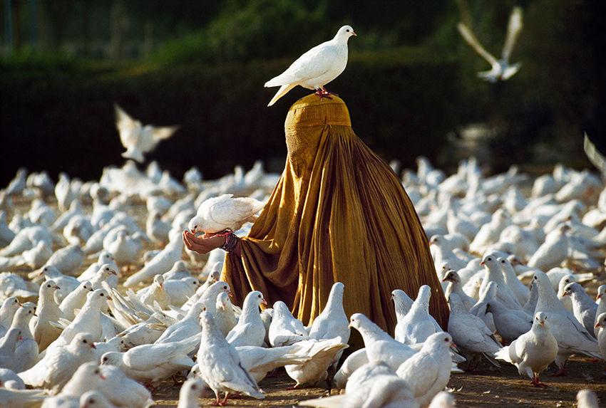 Мы с тобой одной крови 35 невероятных кадров из жизни людей и животных от легендарного фотографа Стива МакКарри, фото № 8