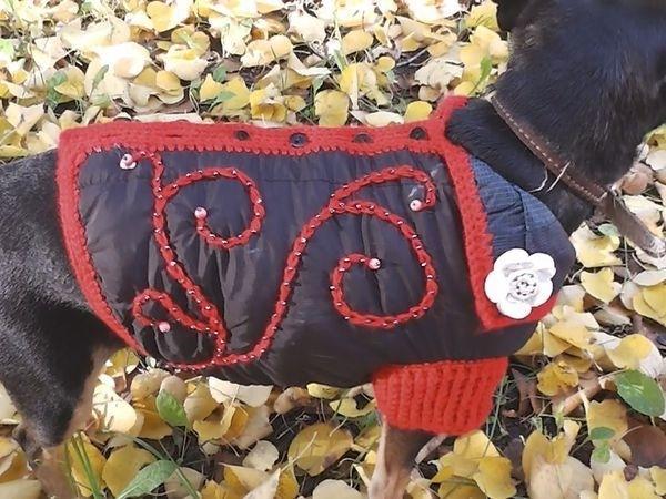 Одежда для собак своими руками 7 мастер-классов + много полезного!, фото № 1