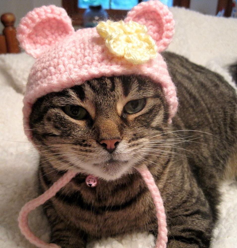 шапки с кошками картинки