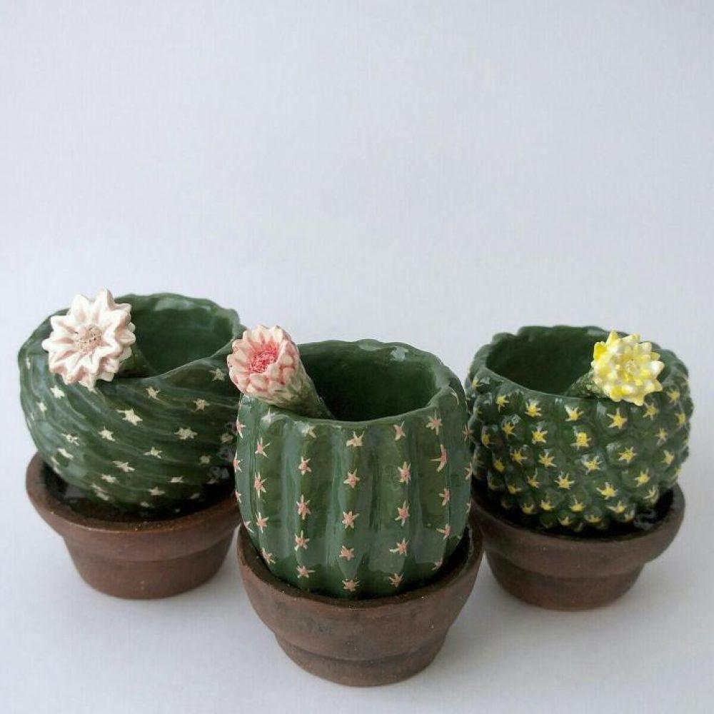 Уродливые красавцы-кактусы