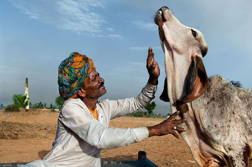 Мы с тобой одной крови 35 невероятных кадров из жизни людей и животных от легендарного фотографа Стива МакКарри, фото № 4