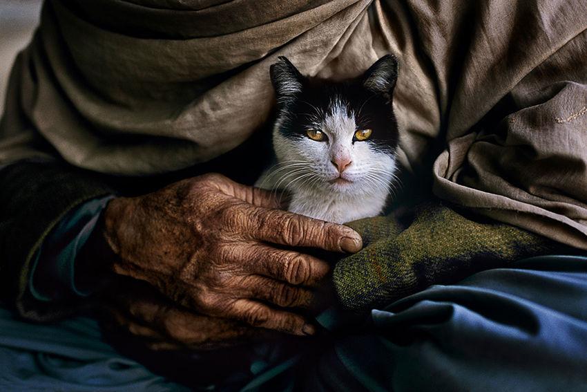 Мы с тобой одной крови 35 невероятных кадров из жизни людей и животных от легендарного фотографа Стива МакКарри, фото № 21