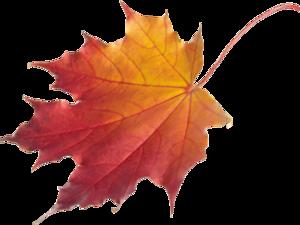 Анонс! Совместная ярмарка  «Времена года- Осень». Ярмарка Мастеров - ручная работа, handmade.