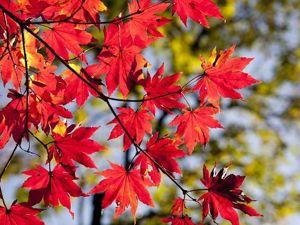 Ярмарка  «Времена года -Осень» . День второй. Ярмарка Мастеров - ручная работа, handmade.
