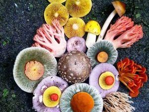 Magic of Nature: Magic Worlds of Jill Bliss. Livemaster - handmade