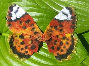 """Создаем крылья бабочки методом """"шерстяной пирог"""". Ярмарка Мастеров - ручная работа, handmade."""