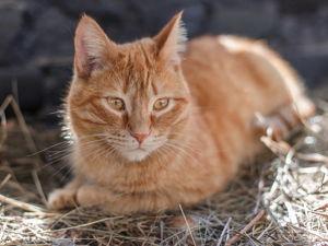 Кошачья и личная жизнь. Ярмарка Мастеров - ручная работа, handmade.