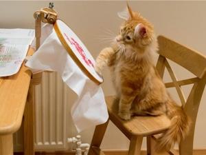 Почему именно вышивка? С чего все начиналось. Ярмарка Мастеров - ручная работа, handmade.