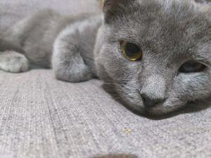 Взяла вторую кошку из приюта, она больна. Сбор закрыт! Спасибо всем!. Ярмарка Мастеров - ручная работа, handmade.