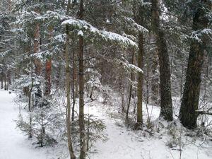 Прогулка в зимнем лесу. Ярмарка Мастеров - ручная работа, handmade.
