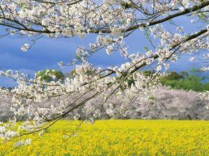 Теория времён года — цветущая весна. Ярмарка Мастеров - ручная работа, handmade.