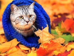 Аукцион   «Теплая осень»!. Ярмарка Мастеров - ручная работа, handmade.