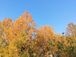 Осеннее. Ярмарка Мастеров - ручная работа, handmade.