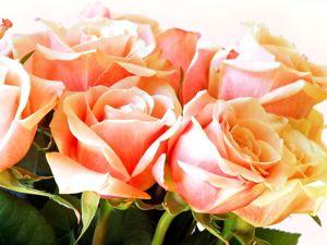 Розы весной!. Ярмарка Мастеров - ручная работа, handmade.