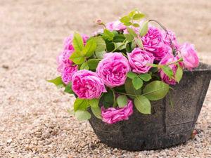 Французские поговорки и выражения. Найти вазон с розами. Ярмарка Мастеров - ручная работа, handmade.