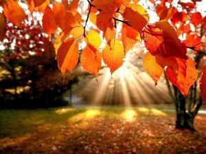 ЗАКРЫТ Аукцион Здравствуй, осень! Каждый день добавляем работы!. Ярмарка Мастеров - ручная работа, handmade.