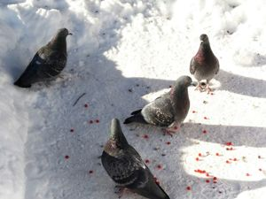 Чем кормить птиц зимой?. Ярмарка Мастеров - ручная работа, handmade.