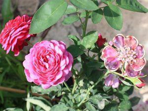 Винтажные украшения и садовые розы: точки соприкосновения. Ярмарка Мастеров - ручная работа, handmade.