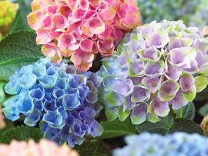 Цветок, похожий на фиолетовое солнце. Ярмарка Мастеров - ручная работа, handmade.