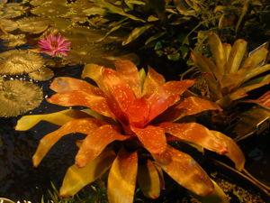 Тропический рай в разгар московской зимы. Ярмарка Мастеров - ручная работа, handmade.