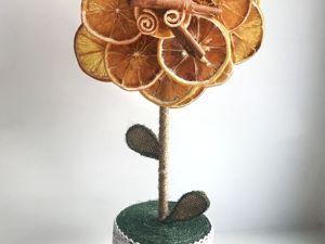 Как смастерить топиарий из сушеных апельсинов. Ярмарка Мастеров - ручная работа, handmade.