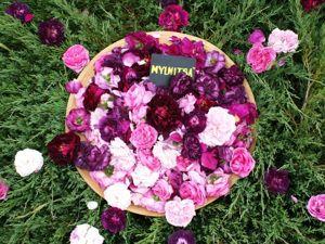 Гидролат розы. Ярмарка Мастеров - ручная работа, handmade.
