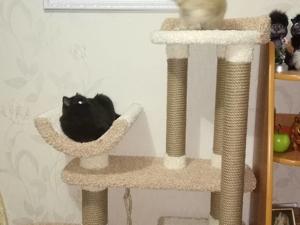 Из всех животных я больше всего очарован кошками. Ярмарка Мастеров - ручная работа, handmade.