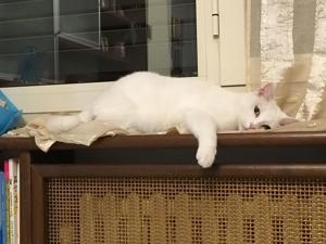 Про котов и собак — кто как спит. Ярмарка Мастеров - ручная работа, handmade.