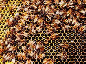Чудодейственная мазь  с  использованием пчелиного ПОДМОРА !. Ярмарка Мастеров - ручная работа, handmade.
