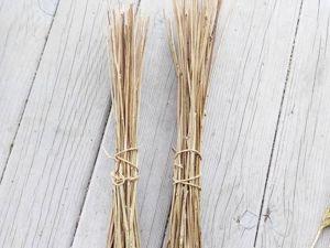 Тростинки рудбекии (для доращивания). Ярмарка Мастеров - ручная работа, handmade.