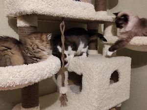 Почему все так любят котиков?. Ярмарка Мастеров - ручная работа, handmade.
