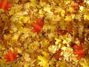 А вы успели на праздник  «Шуршащей листвы» ?. Ярмарка Мастеров - ручная работа, handmade.
