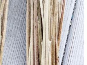 Стволы для доращивания. Ярмарка Мастеров - ручная работа, handmade.