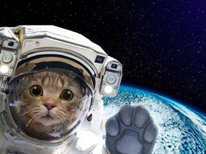 Кошка в космосе (интересная история). Ярмарка Мастеров - ручная работа, handmade.