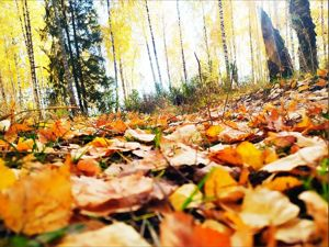 Осенью обязательно нужно догуливать то, что не догулялось летом. Ярмарка Мастеров - ручная работа, handmade.