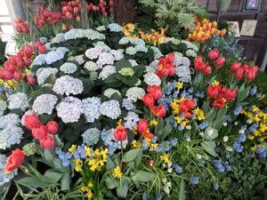 Тюльпановый бум — фоторепортаж с фестиваля цветов из Сада Европы. Ярмарка Мастеров - ручная работа, handmade.