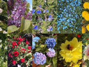 Городские цветы, навсегда завладели вы сердцем моим!. Ярмарка Мастеров - ручная работа, handmade.