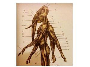 Телесная карта страхов — наше тело помнит всё!. Ярмарка Мастеров - ручная работа, handmade.