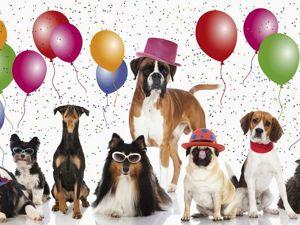 2 июля — Международный день собак. Ярмарка Мастеров - ручная работа, handmade.