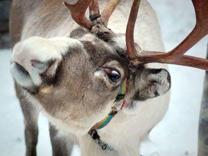 Так вот ты какой, свадебный олень! Идеи декора для зимнего торжества. Ярмарка Мастеров - ручная работа, handmade.