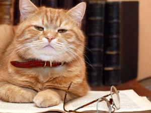 Если бы ваш кот умел говорить. Полезные лайфхаки от пушистых хитрецов). Ярмарка Мастеров - ручная работа, handmade.