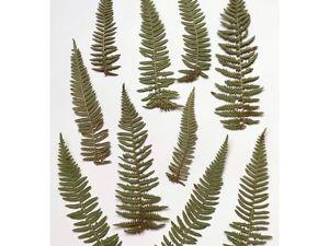 Зеленые листики папоротника. Ярмарка Мастеров - ручная работа, handmade.